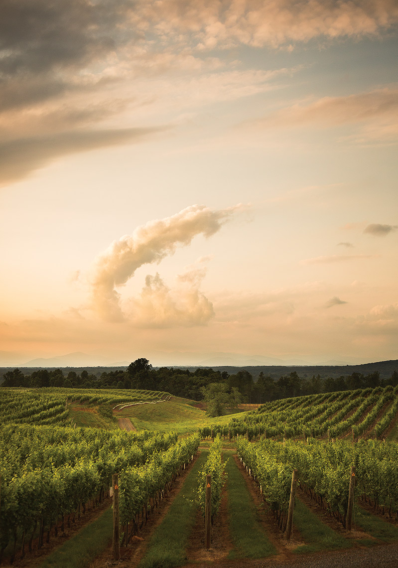 vineyard, wine, clouds, vines